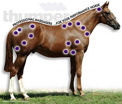 Horse Massage Therapy Points